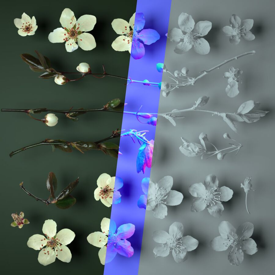 Breakdown of a flowers rendering showing geometry, normal map and final image with all texture atlas from 3D digital nature scans.